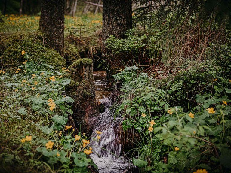 gasteinertal-nationalpark-hohe-tauern_hochmoor